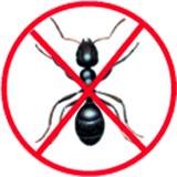 D sinsectisation casablanca for Anti fourmis dans la maison